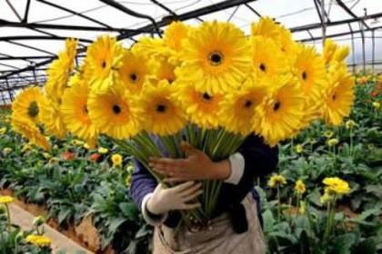 эксклюзивные букеты от цветочной доставки