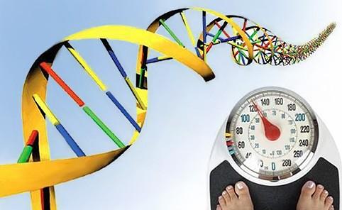 ген ожирения